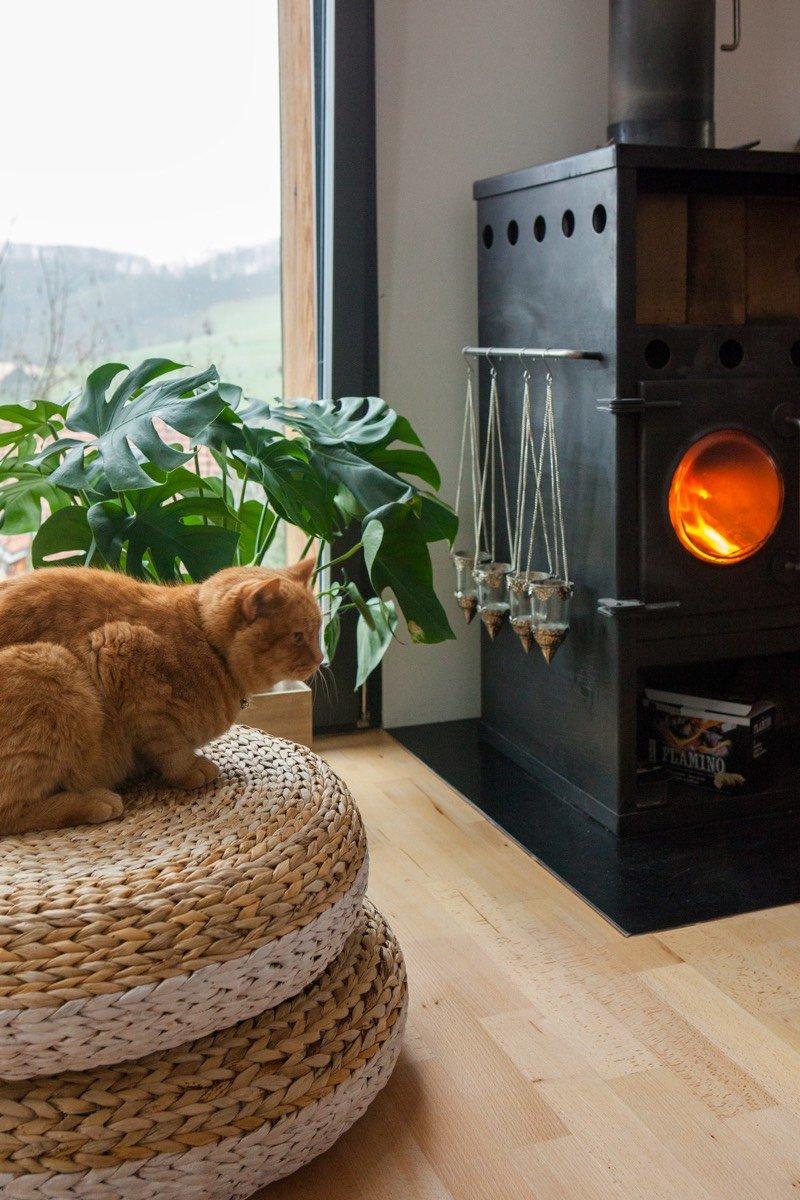 Le chat Chibu s'est installé confortablement devant la cheminée.