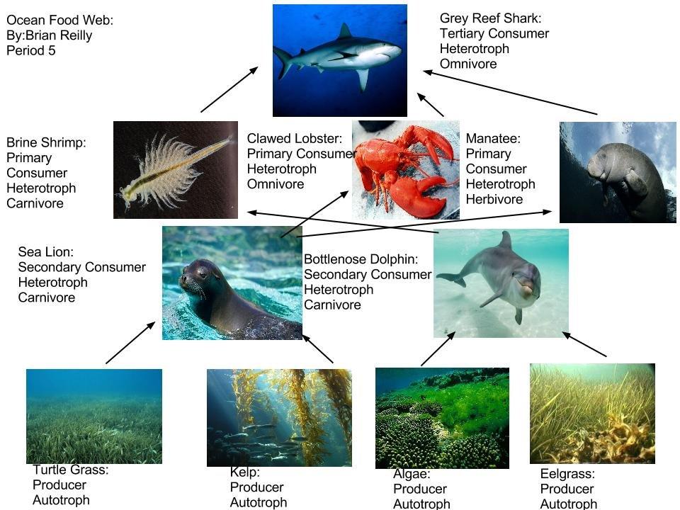 Everglade Food Web Diagram College Paper Academic Writing Service