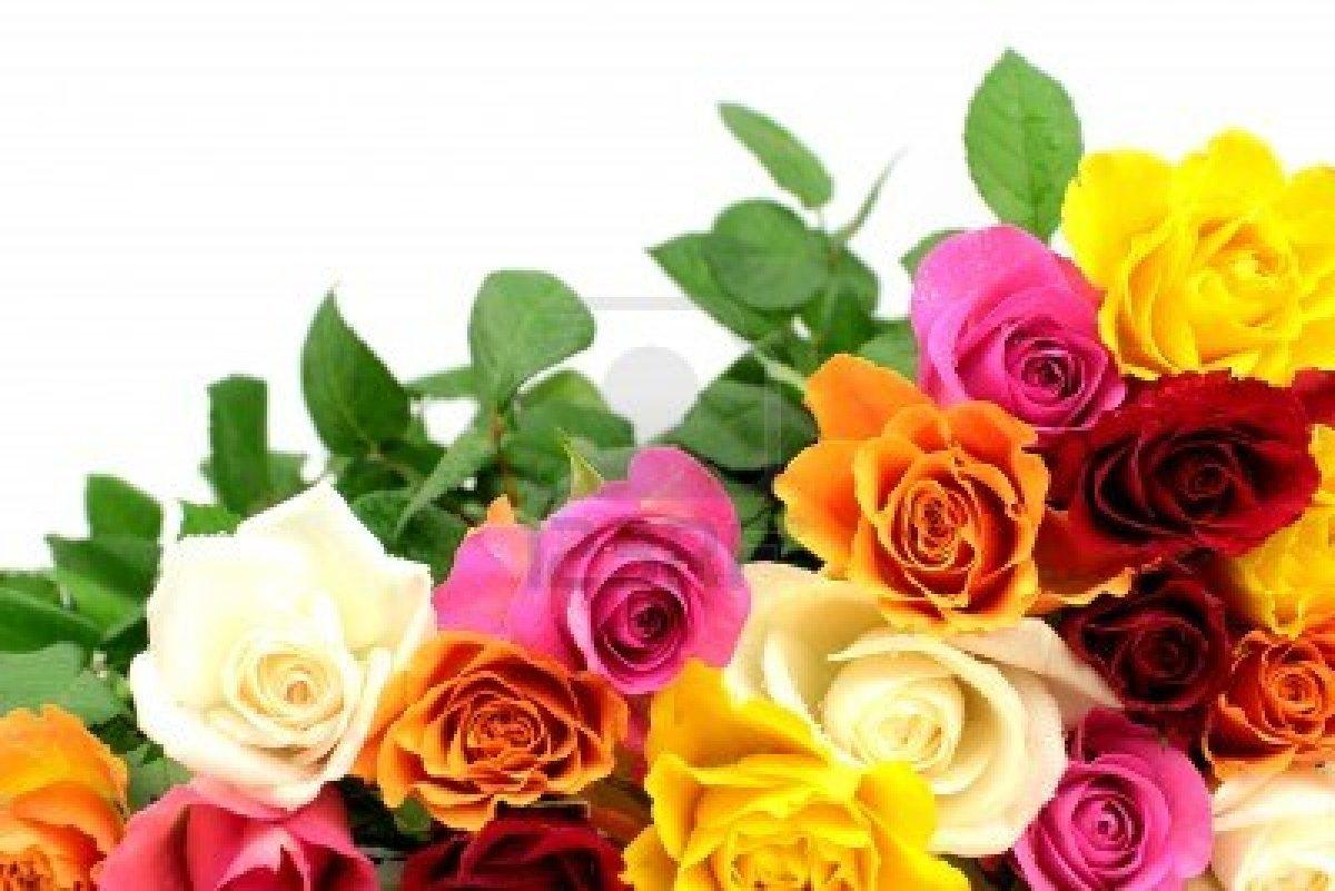 Los distintos colores y significados de las rosas thinglink - Significado de los colores de las rosas ...