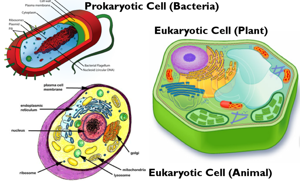H. Darius, 6th Prokaryotic V.S. Eukaryotic Cells