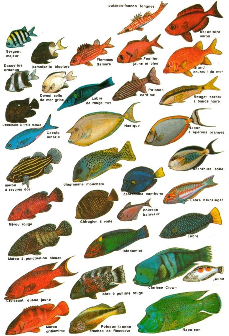 Ma vie dans la mer m diterran e - Image poissons ...