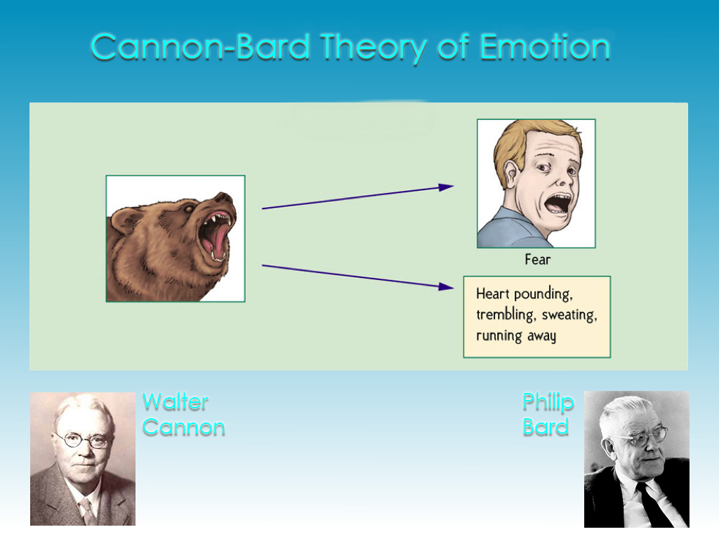 cannon bard theory of emotion According to the cannon-bard theory of emotion, the arousing stimulus first triggers the physical response, then the subjective experience of emotion - 2617313.