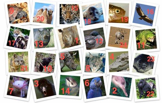 Endangered Animals Collage