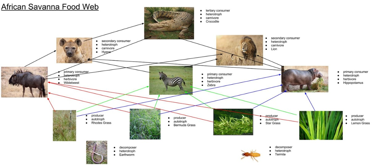 also Red Tailed Hawk Holding Rabbit additionally Levels Of Organization additionally Mara Wildebeest in addition Abiotic Biotic Factors. on tundra food chain pictures