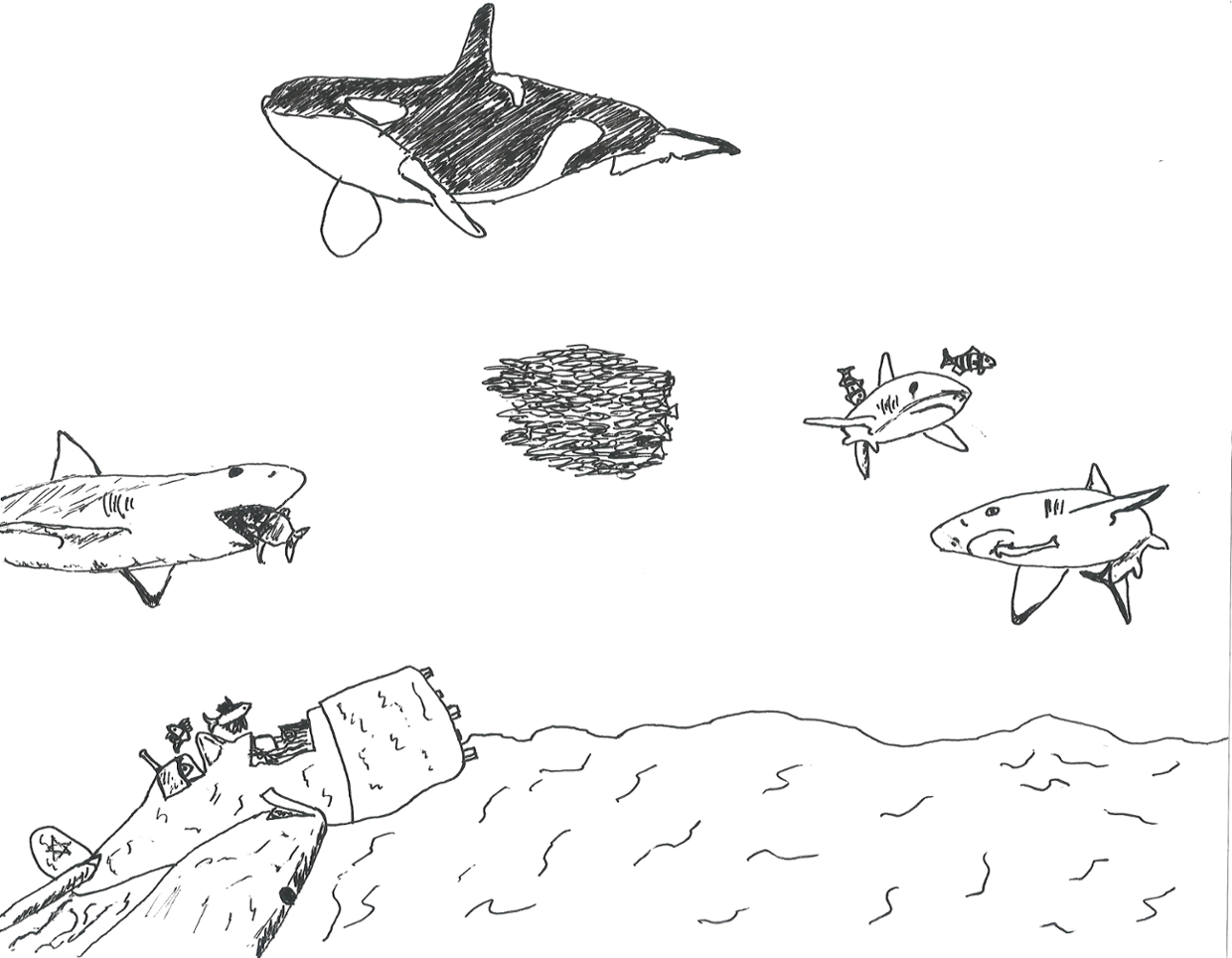 science 10 e - ecosystem drawing project