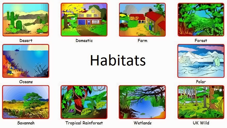 Animals and habitats thinglink