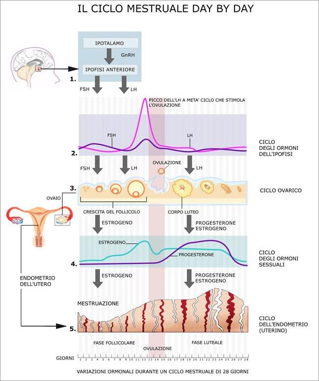alimenti per stimolare ovulazione