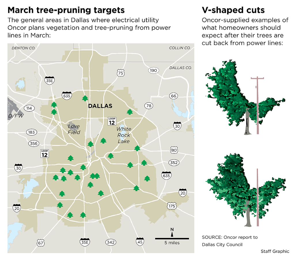 Electric Company To Amp Up Tree Trimming In Dallas