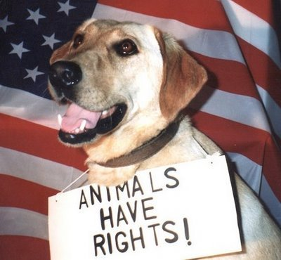 the perception of animal rights in Public opposition to animal testing grows more than one in three people are against the use of animals in medical research, according to government-funded research denis campbell , health.