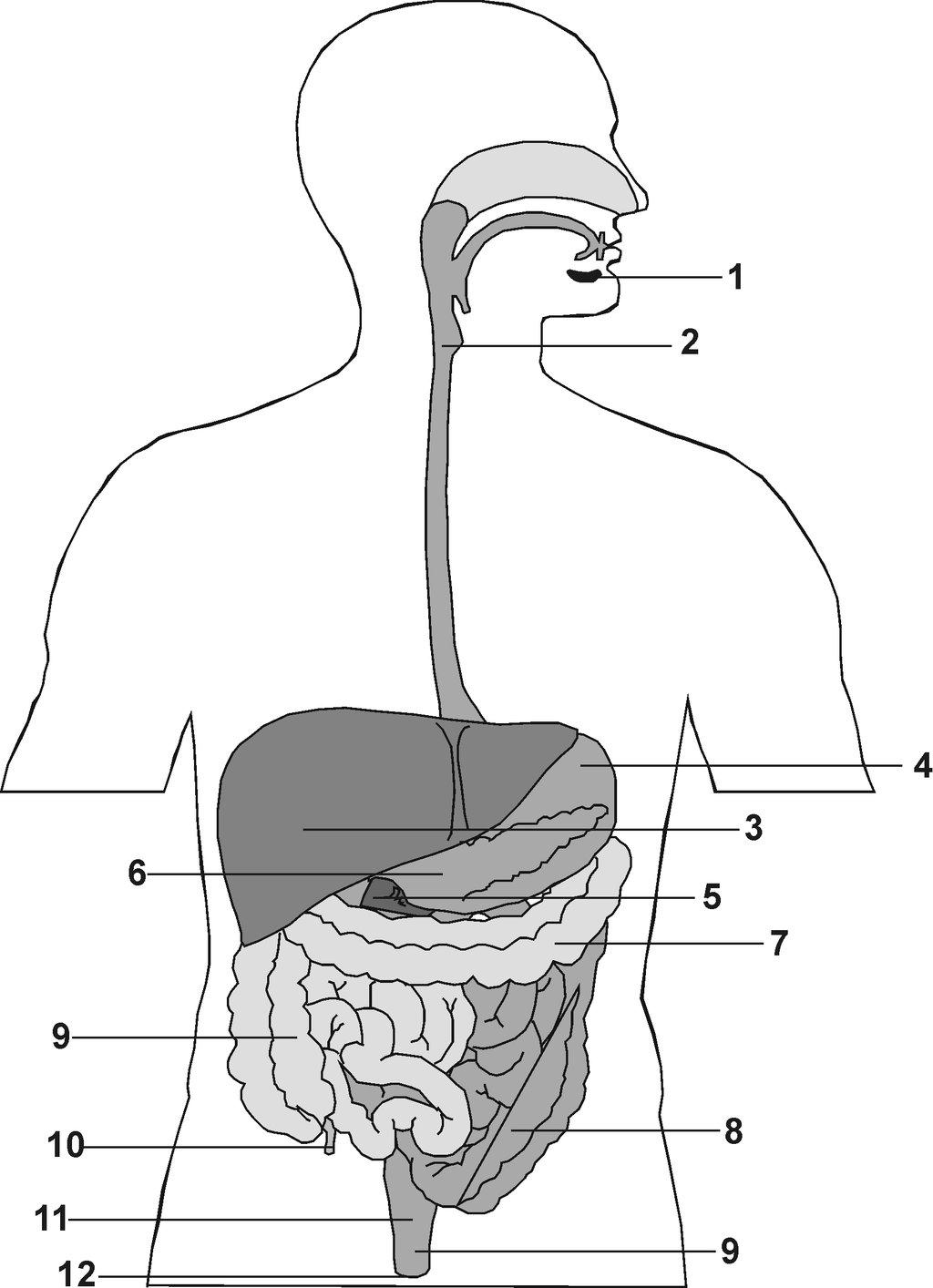 digestive system thinglink : digestion diagram pdf - findchart.co