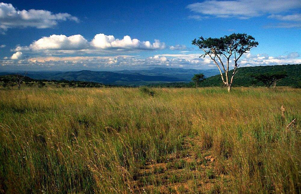 Africa Grasslands 63