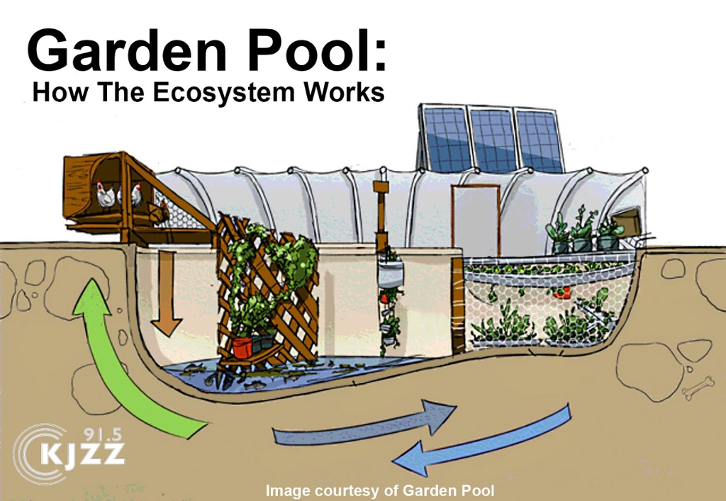 Garden pool how the ecosystem works thinglink for Ecosystem pool