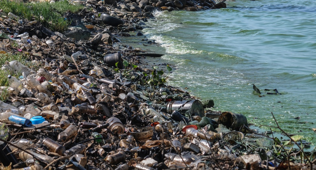 main cause environmental degradation size human population