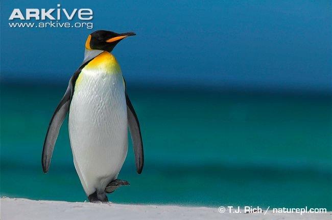 Видео Про Пингвинов
