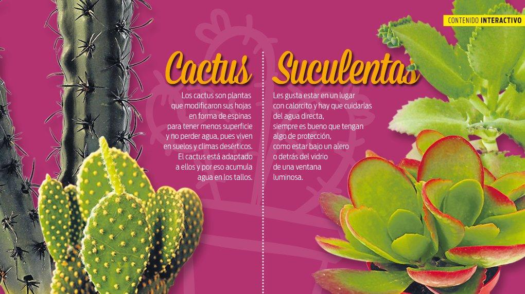 Cactus vs suculentas cu les son sus diferencias d a a d a for Curso cactus y suculentas