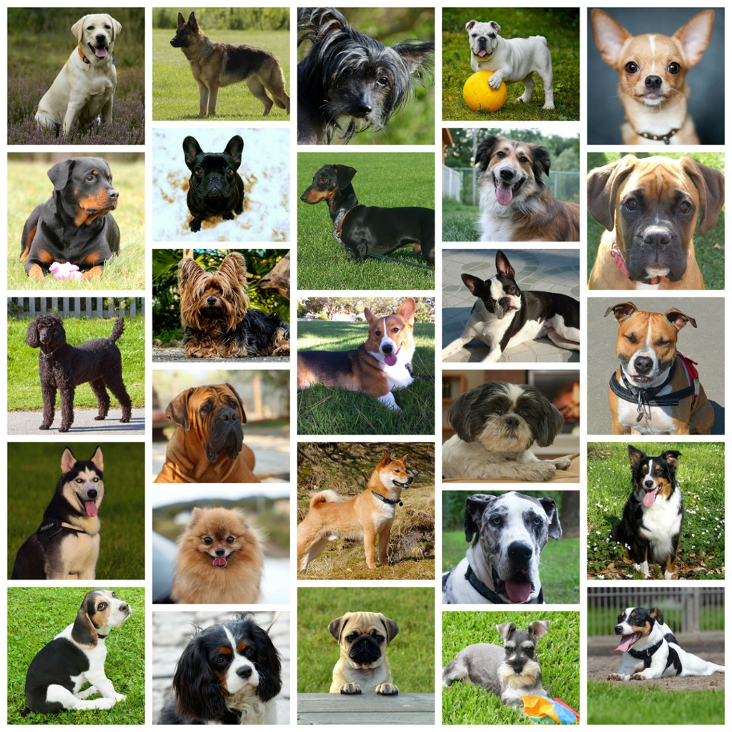What is your favorite breed of dog and why 91