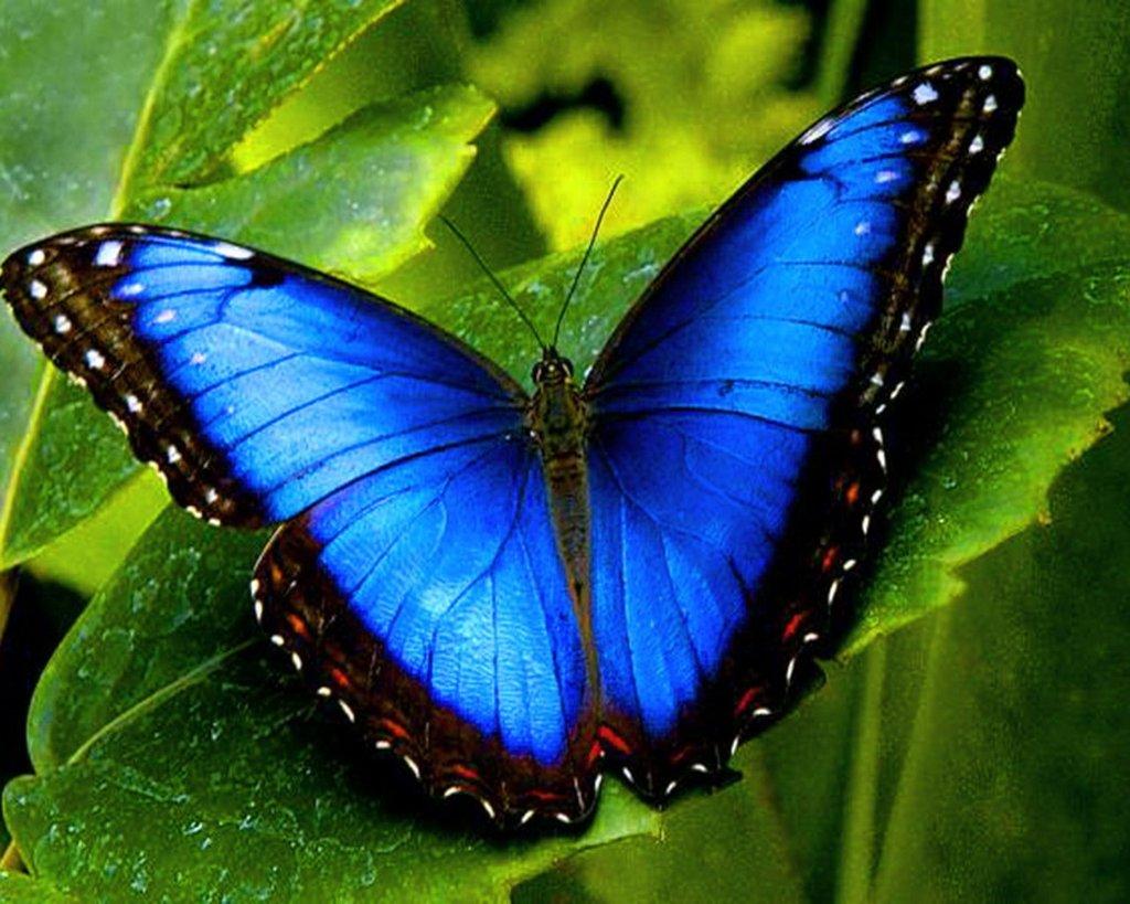 Butterfly - ThingLink 10 Most Beautiful Butterflies
