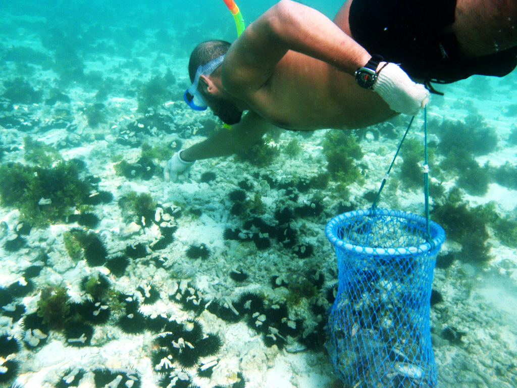 the pearl pearl diving Explore pearlsofjoycom's board pearl diving on pinterest | see more ideas about diving, scuba diving and snorkeling.