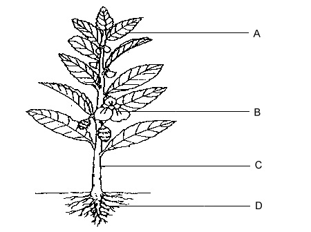 Roots, stem, flower