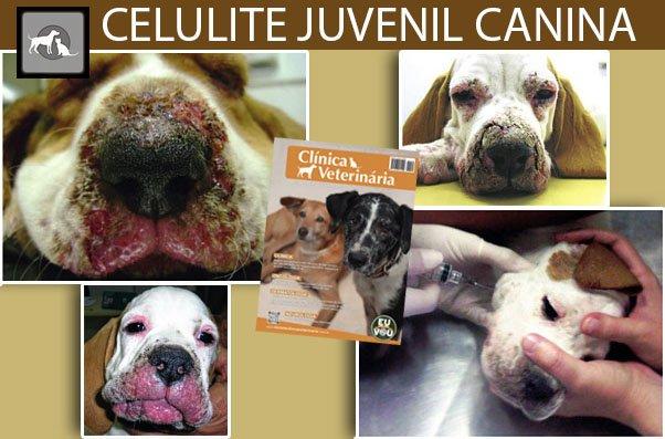 juvenil cellulit