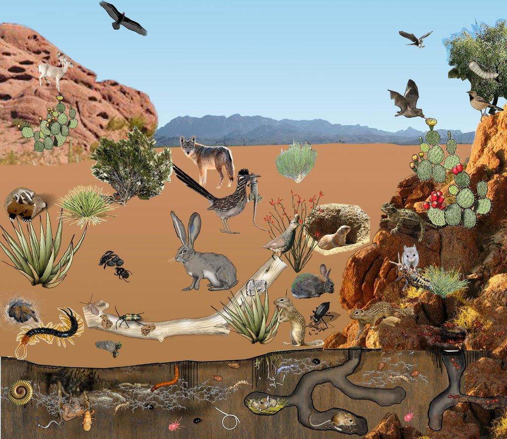 14 Desert Biome Facts - Animals, Plants, Temperature