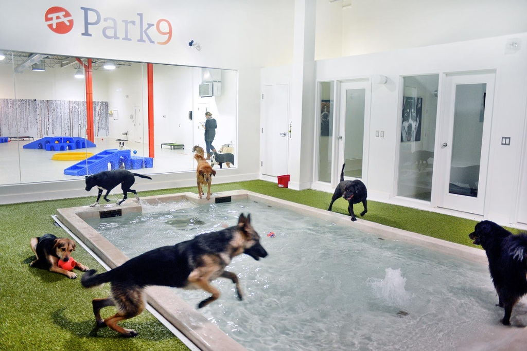 Inside park9 toronto 39 s stylish indoor resort for pets for Pet hotels near me