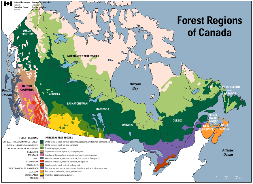 Forests Cpaws