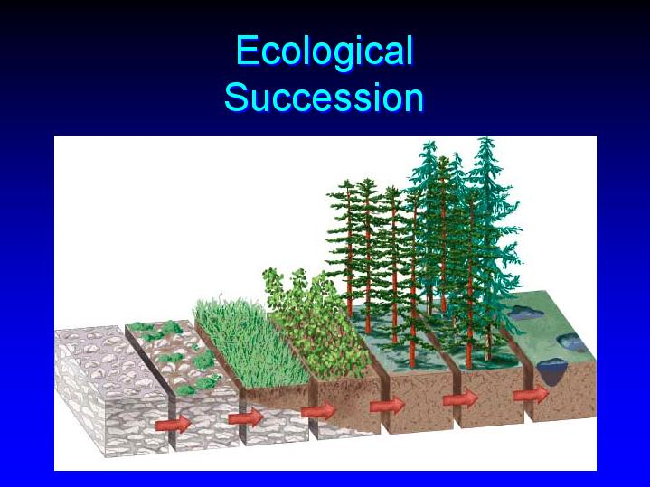 ecological succession 2 Coral reef succession  2explore anthropogenic and natural causes of change and ecological succession next, have students draw a two-column chart in their .