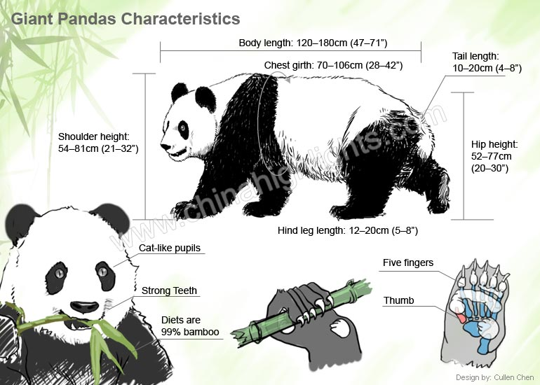 panda adaptation