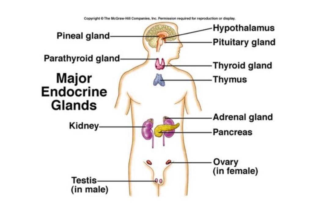 an analysis of the disorders of the endocrine gland Describe treatment options available for pituitary adenomas and disorders discuss various disorders of the pituitary gland endocrine gland found at the.