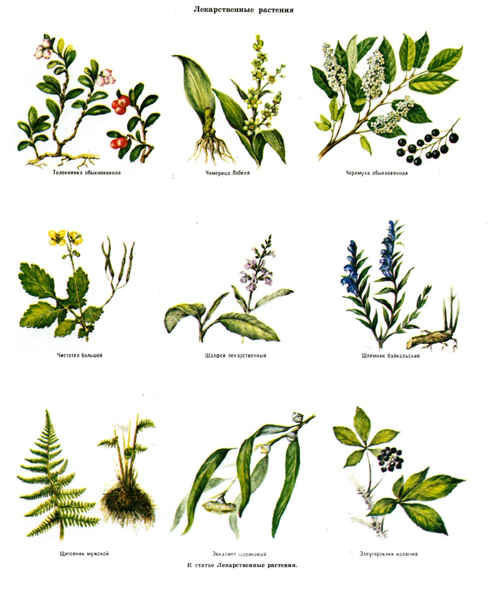 Растения урала фото и описание для детей