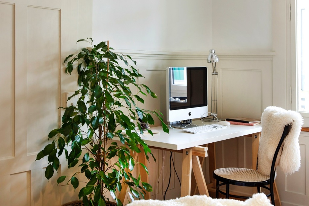 The study corner with computer and house plant