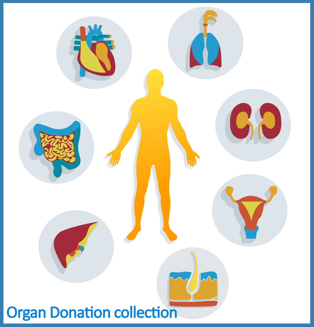 Organ Donation Week: A reading list