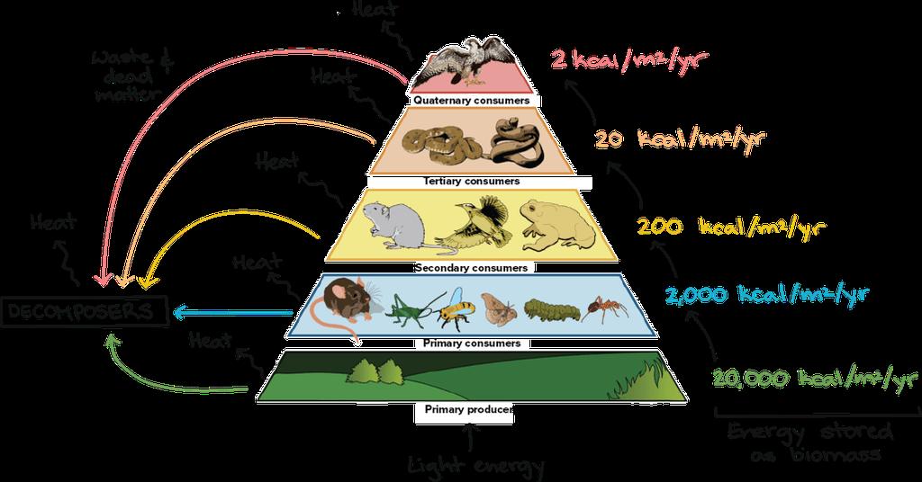 Energy Pyramid Diagram
