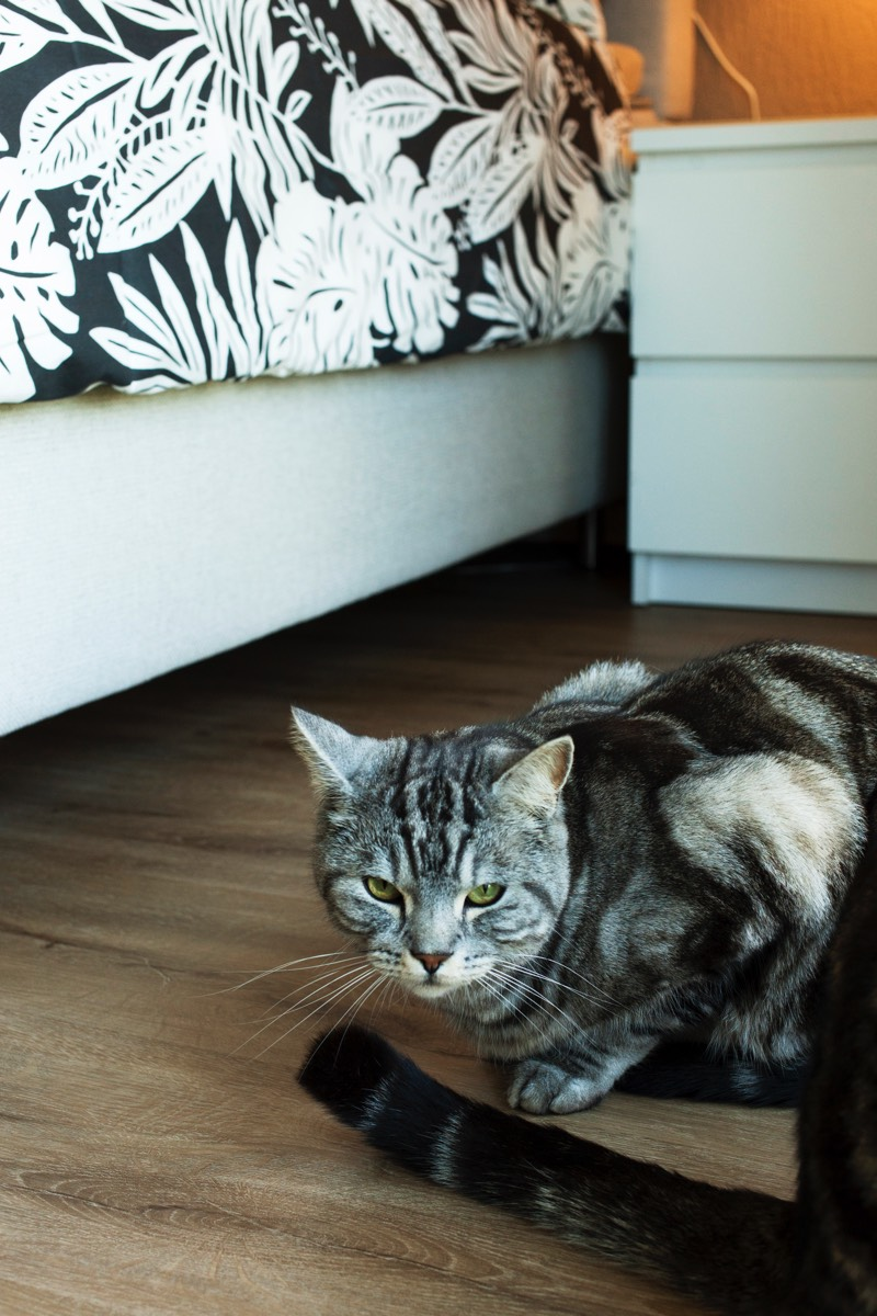 Il gatto Diego in camera da letto