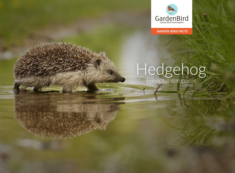 Hedgehog - Interact Fact File