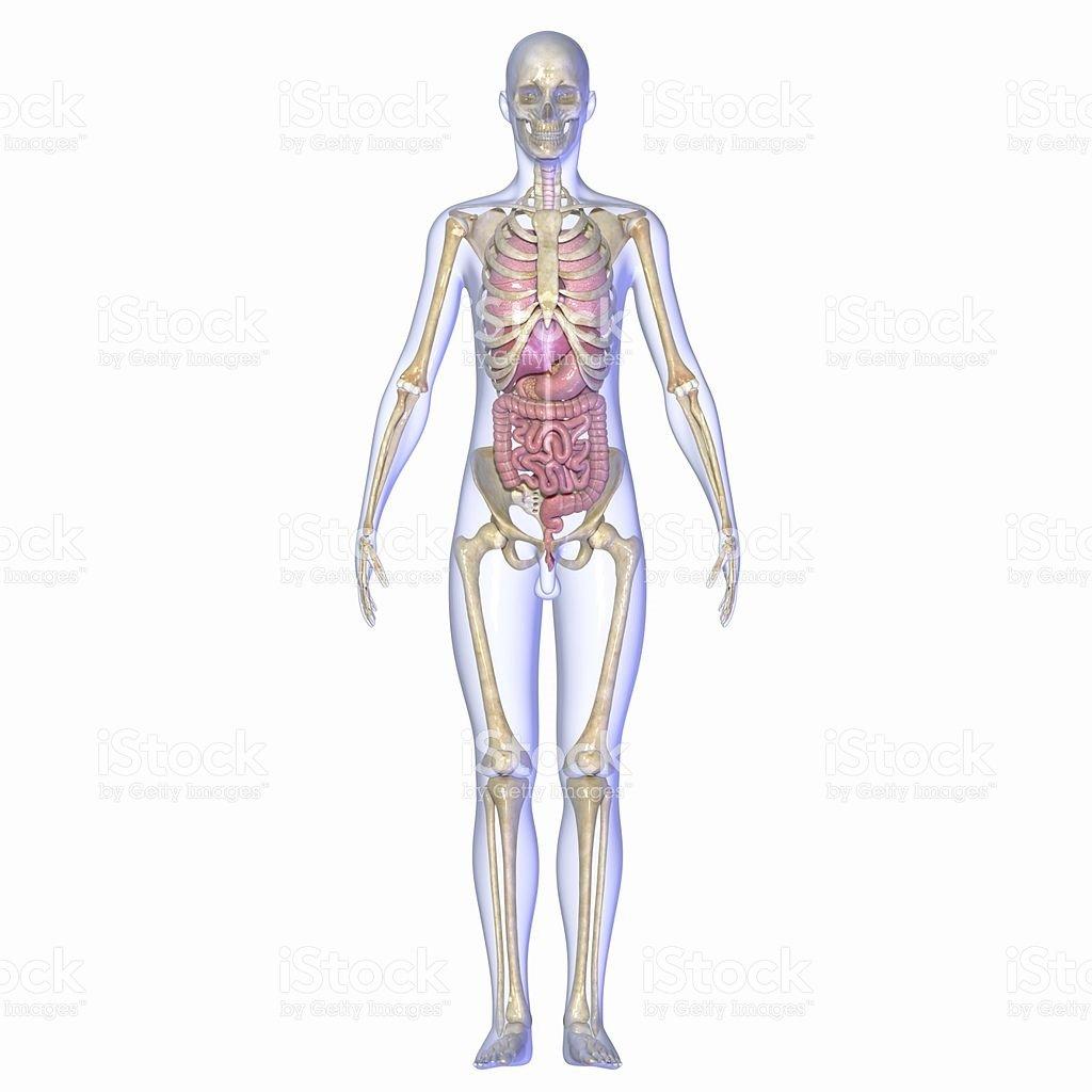 Металлы в организме человека-2