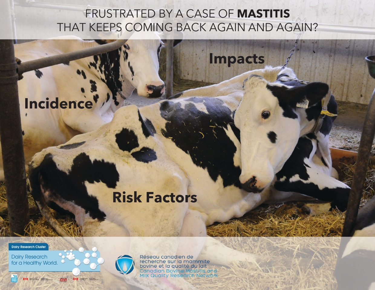 Frustrated by a case of mastitis again and again