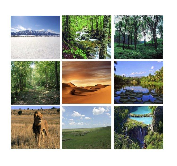 المناطق الحيوية البرية الرئيسية