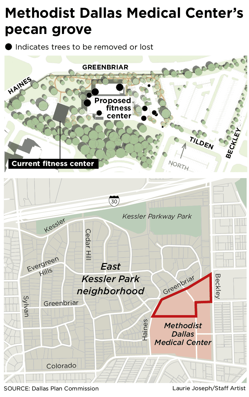 How a Dallas hospital's fight over 11 beautiful North Oak Cliff pecan trees turned ugly