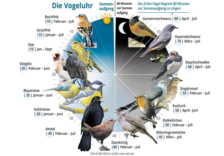 Die Vogeluhr