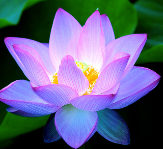 Lotus flower buddhist meaning images flower decoration ideas lotus flower buddhist meaning choice image flower decoration ideas lotus flower buddhist meaning image collections flower mightylinksfo