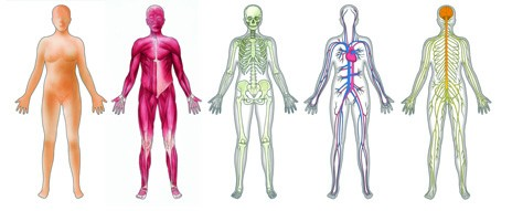Overview of Human Body systems