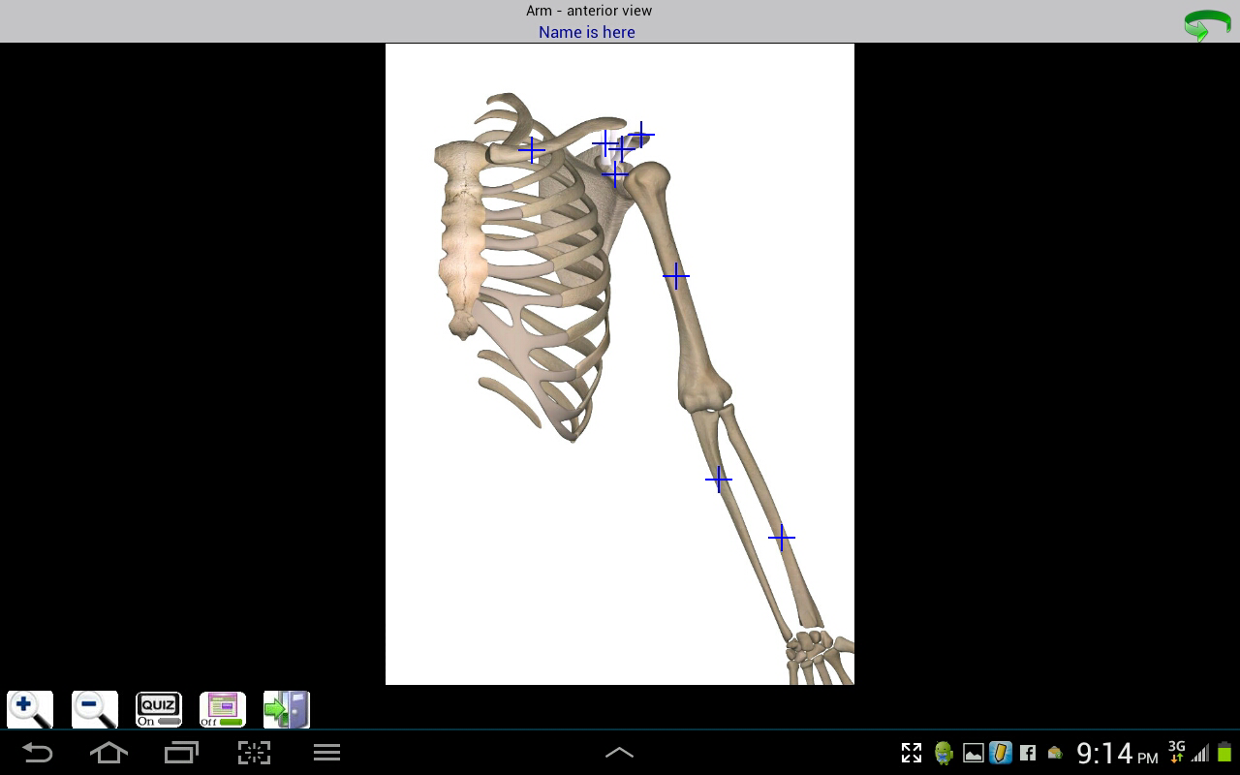 Clavicle Acromion Process Coracoid Process Humerus Ul