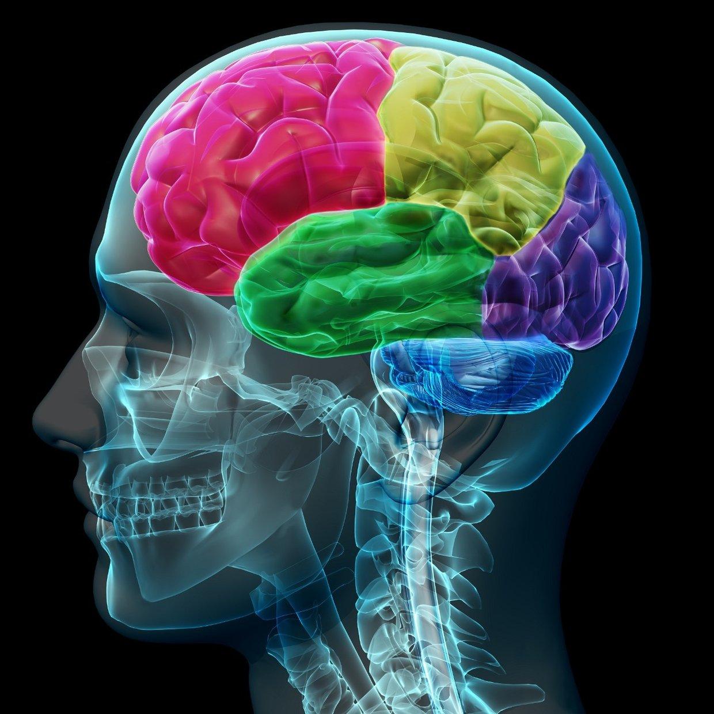 Interactive Brain