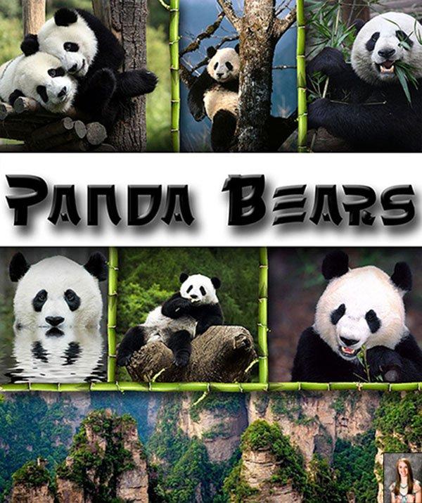 Panda Behavior, Panda Lifestyle, Panda Location, Panda Vi...
