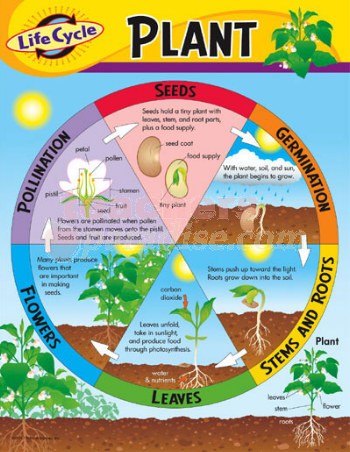 Plant Life Cycle, Watch Sid The Seed, Parts of a Plant, P... - photo#20