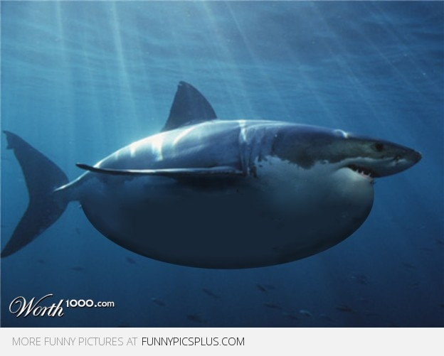 Fat shark that ate your mom