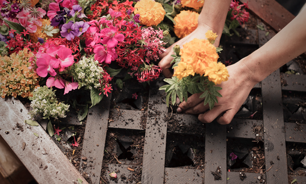 Ad: How to make a vertical garden with The Home Depot Garden Club