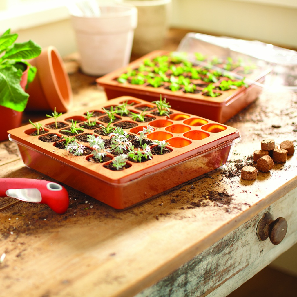 Starting An Herb Garden With A Seed Starter Kit Nibbles